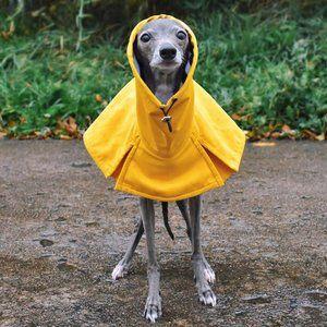 Iggy Clothing -Oliviero Yellow Reversible Raincoat